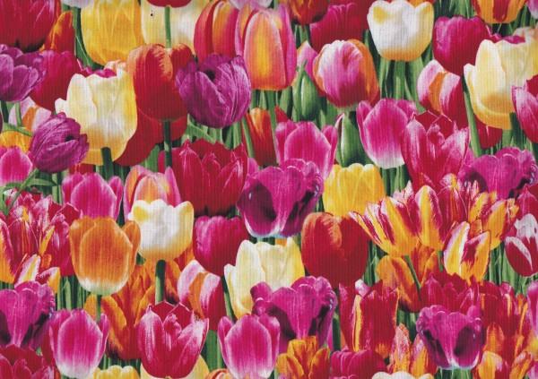 Nature-Tulpen