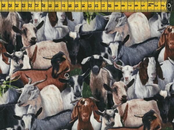 Black Farm Animals