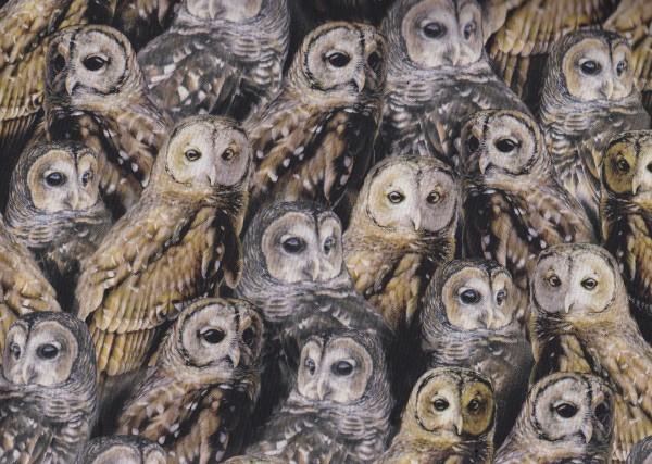 Nocturnal Wonders Owls