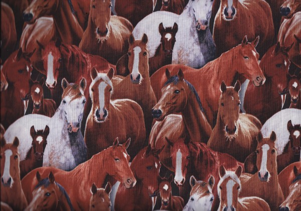 Farm Animals - Pferde